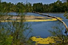 Lake Tabourie, near Ulladulla, with amazing yellow algae in the water