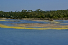 More algae ... it was so beautiful!  Lake Tabourie, near Ulladulla.